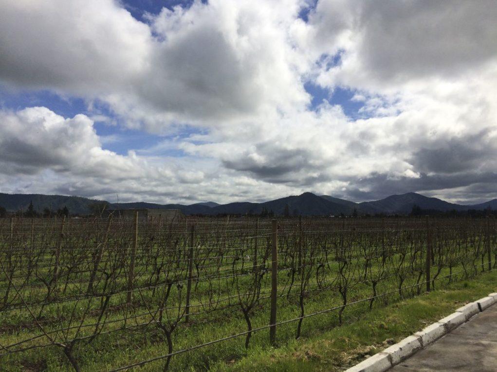 viña-casablanca-vinhedos-sabina-fuhr