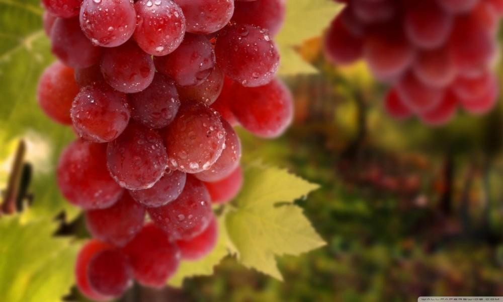 alimentos-que-ajudam-a-combater-o-câncer-uvas-vermelhas