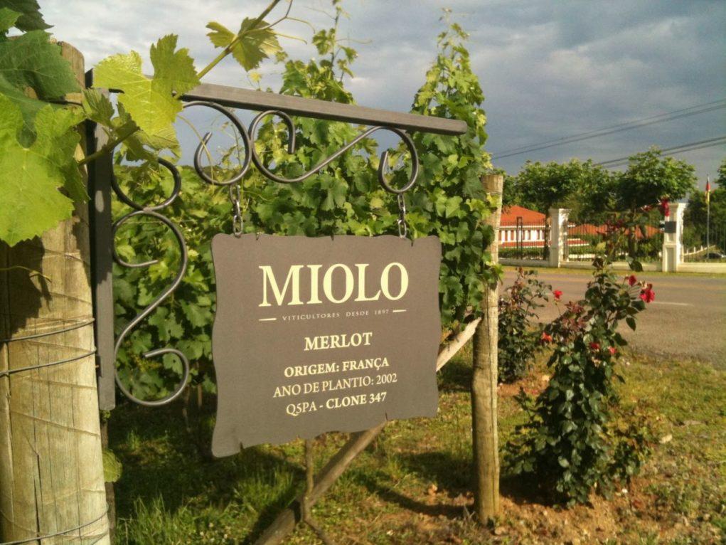 Vinícola-Miolo