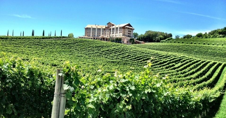 Empresa tem 100% de vinhedos próprio (Foto: Igor Amaral)