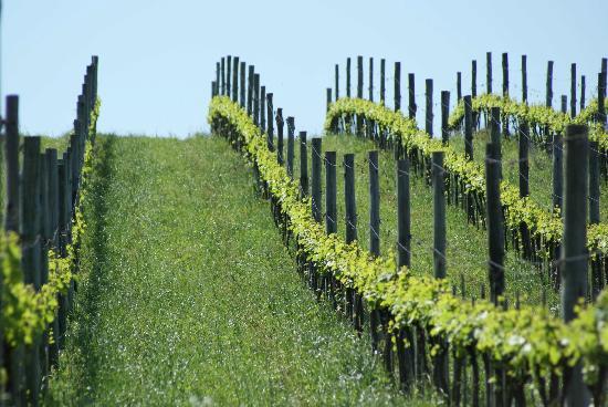 vinicola-lidio-carraro