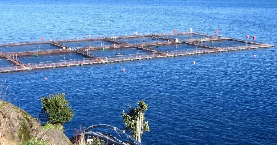 Cerca de 70% do salmão consumido no mundo é criado em viveiros. O Chile é o segundo maior produtor mundial do peixe. Crédito: Divulgação/SalmonChile