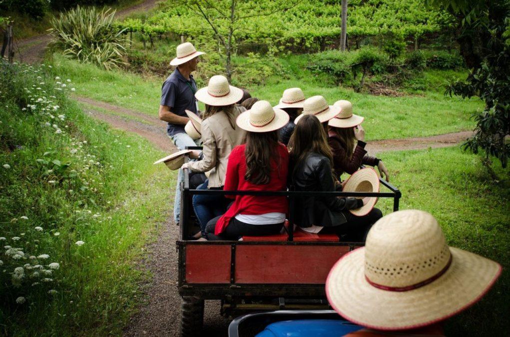 Passeios de tuque-tuque pelo interior dos municípios estão entre as atrações da programação do Dia do Vinho. Foto: Tatiana Cavagnolli
