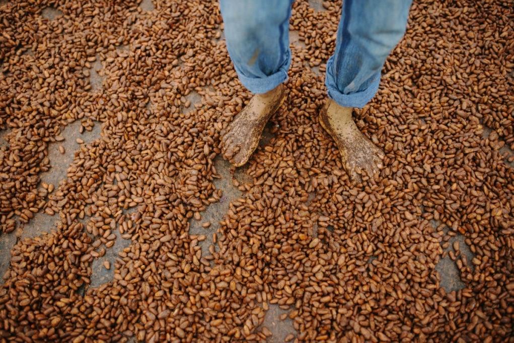 Mendoá é um dos pioneiros no mercado de chocolate fino em Ilhéus
